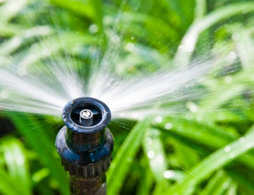 Are you overwatering your yard?